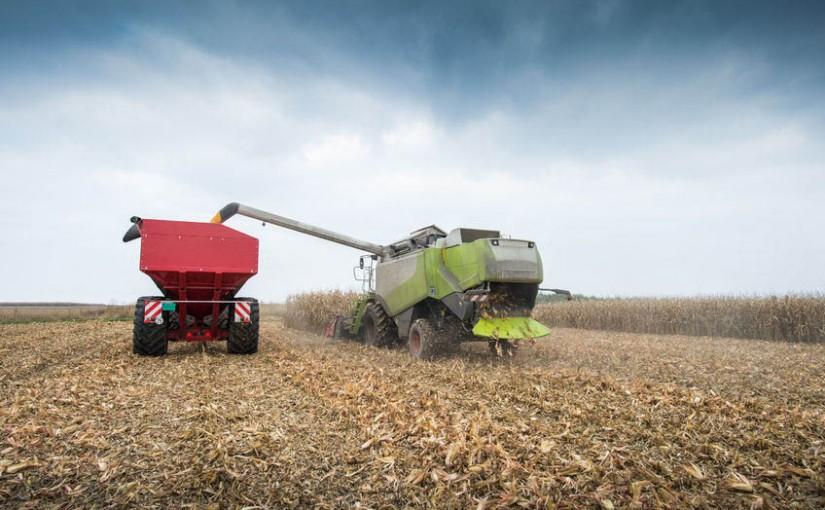 harvest safety, combine in a corn field harvesting grain