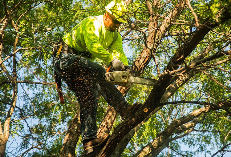 Tree trimmers keep trees healthy and system reliable