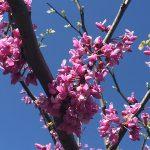 OPPD arboretum, blossoms