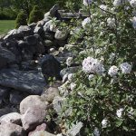 OPPD arboretum, rock and floral
