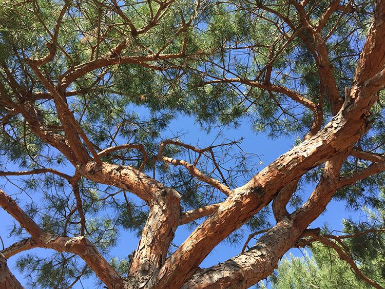 BIG_Arboretum Tree_TZ