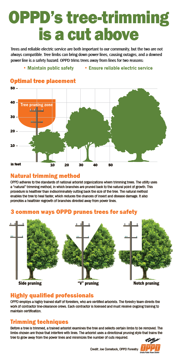 TREE-TRIMMING INFOGRAPHIC