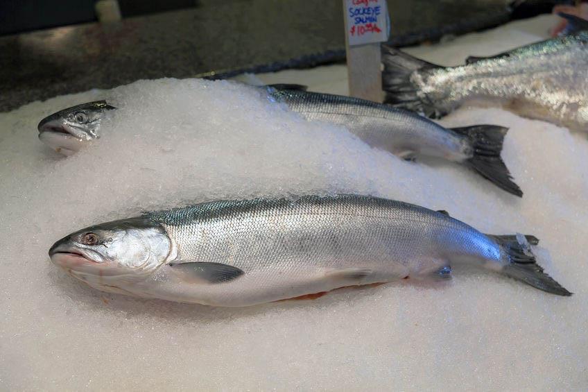 aquaculture, fish on ice