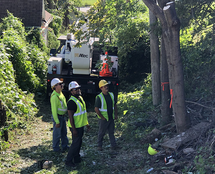 Utility forester, tree-trimming crew evaluates a job site